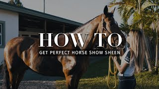 How to: Get perfect horse show sheen with Ellesse Tzinberg