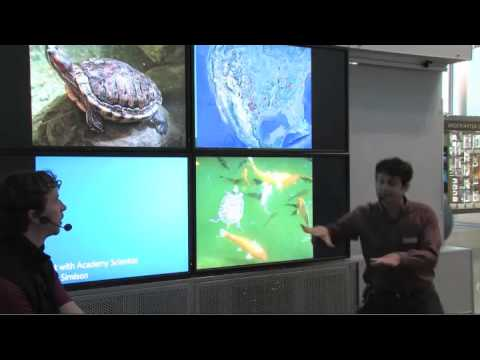 Brian Simison: Chat with an Academy Scientist | California Academy of Sciences