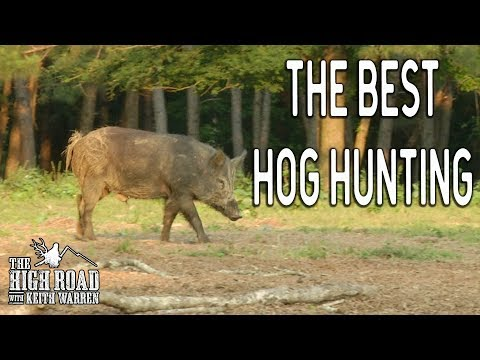 Best Wild Boar Hunting In Texas