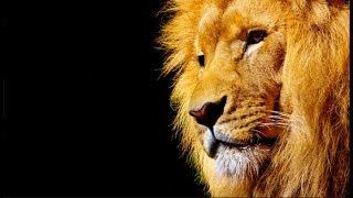 Personnalité du signe du Lion : du 23 juillet au 23 août