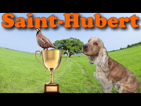 FINALE RÉGIONALE SAINT HUBERT 2014 COCKER SPANIEL WORKING FIELD CHASSE PETIT GIBIER PARTRIDGE HUNT