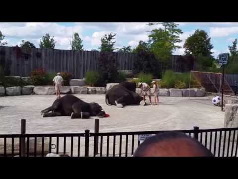 Elephants Show at African Lion Safari park, Hamilton, ON