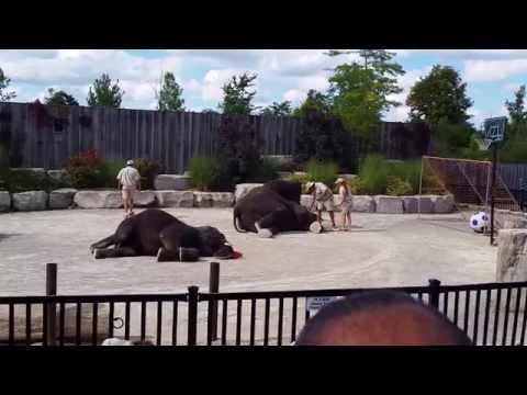Elephants Show At African Lion Safari Park, Hamilton, ON