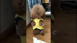Look at these cute and funny puppies dogs 3187