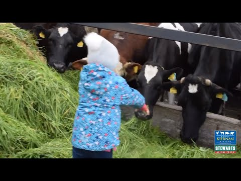 Kiernan Milling: Grennan's Organic Dairy Farm