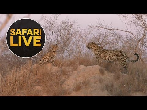 safariLIVE - Sunset Safari - August 15, 2018