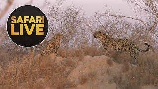 safariLIVE - Sunset Safari - August 15, 2018