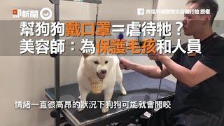 幫狗狗戴口罩=虐待牠? 美容師:為保護毛孩和人員