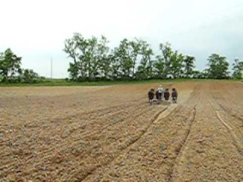 amish working his  farm ohio