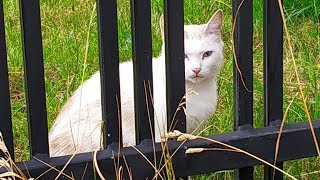 Five cats live on the street / The cat hides from me behind the fence