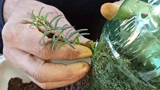 Garrafas Plásticas Para Pendurar Plantas