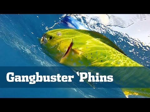 Gangbuster Dolphin Action With Surprise Space Shuttle Appearance - Florida Sport Fishing TV