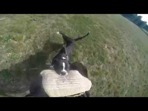Bosorka European K9 Training Base - 8 Months Old, The First Escape