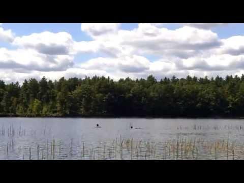 Massabesic Lake, New Hampshire, Loon Call
