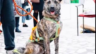 В Данилове готовятся к установке скульптуры беспородной собаки Трезора