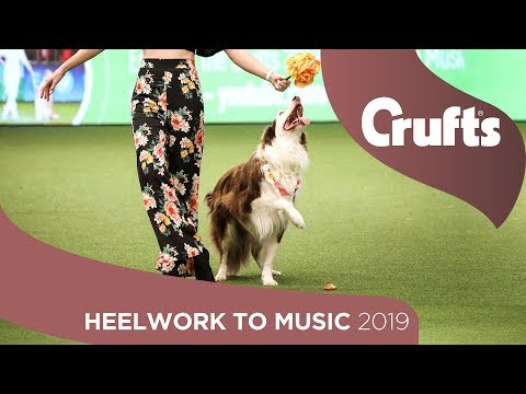 Heelwork To Music Competition Part 3 | Crufts 2019