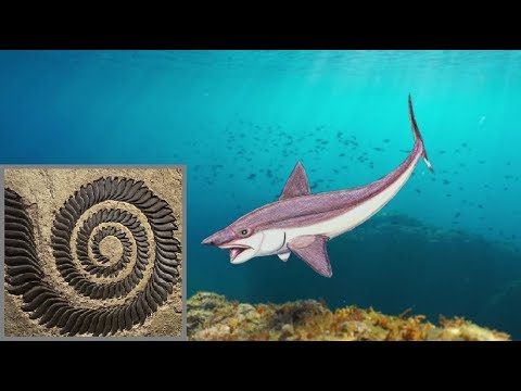 Mystery Of The Spiral Tooth 'Shark'