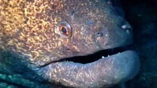 Saltwater Eels - SeaScope