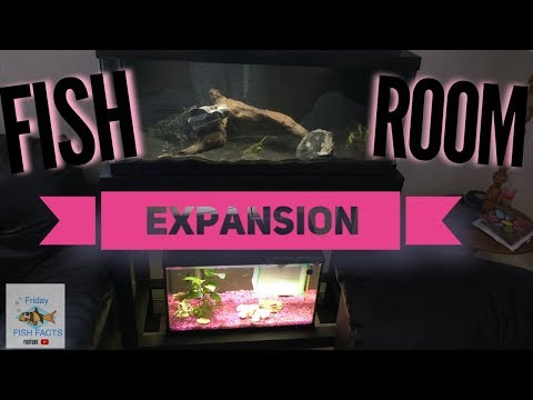 FISH ROOM EXPANSION AND SEACHEM FLOURITE BLACK SAND