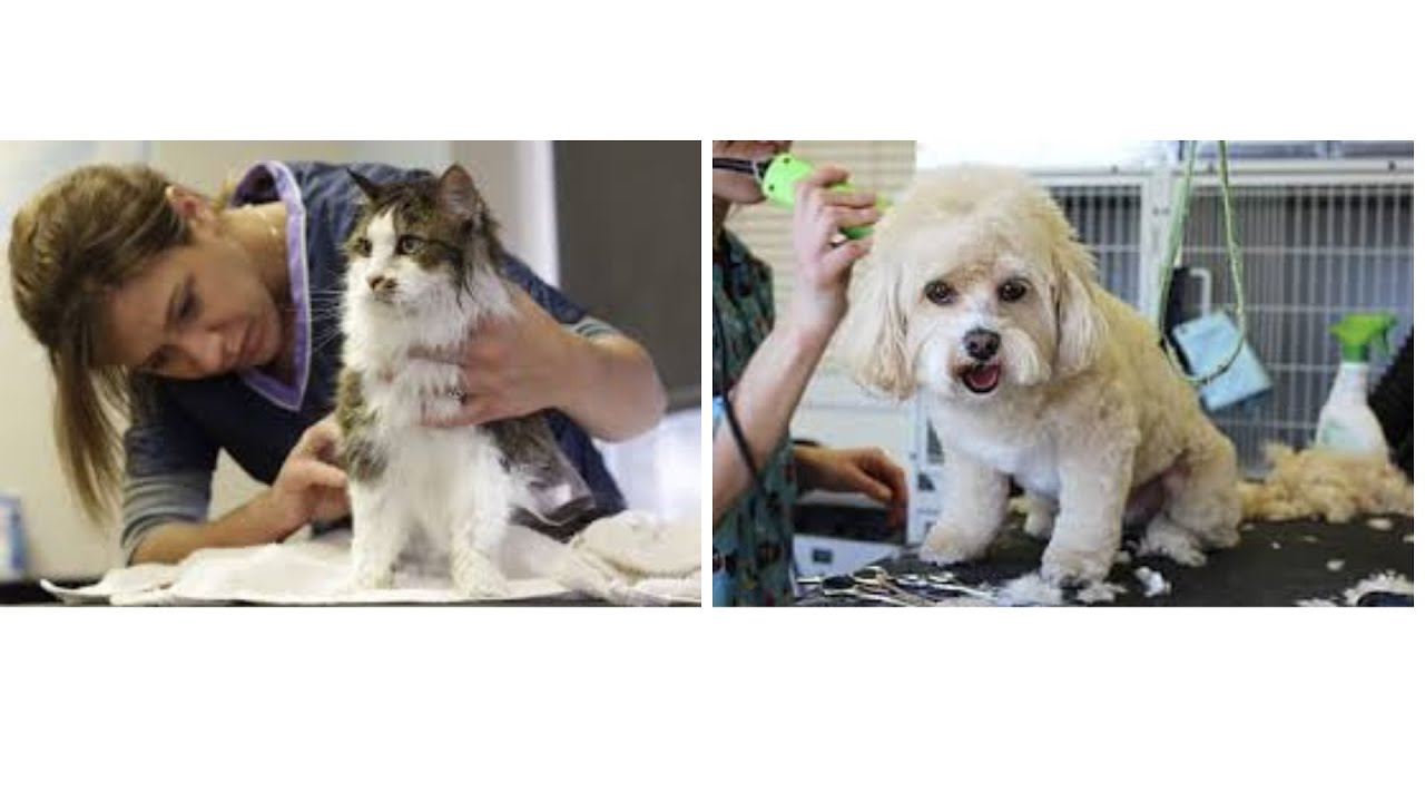 A Perfect Guide to All-Breed Dog Grooming