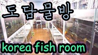 [Fish room tour] 도담물방 생생한 물고기 후기 - 수족관방문