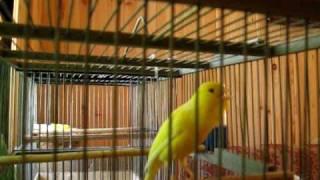 Песня Канарейки(Timbrado., 2009-09-15T08:42:01.000Z)