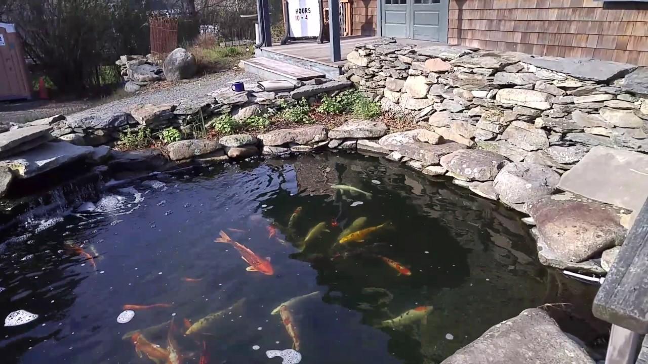 Bloomin Barn Pond
