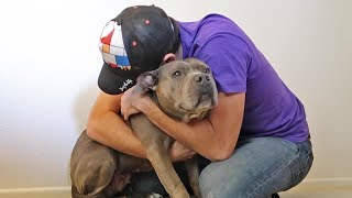 Hugging My Pitbull For Too Long