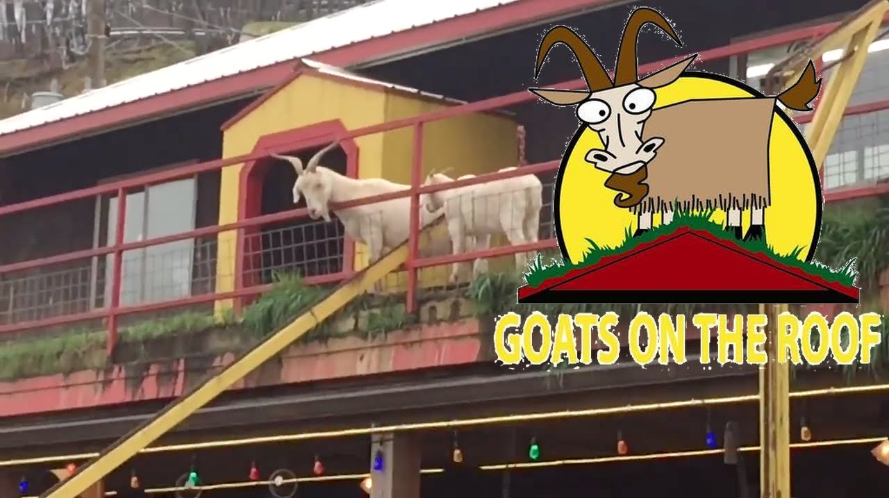 goats on the roof tourist attraction pigeon forge tour