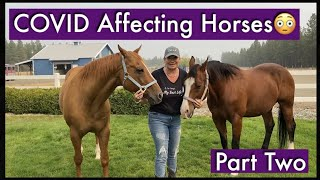 COVID Affecting Horses| Part 2 | Coronavirus and Animals| COVID-19| Coronavirus and Horses| Colic