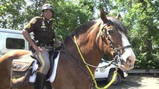 Mounted Patrol; A Day in the Life