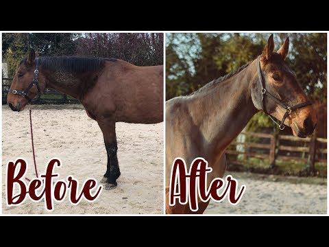 HUGE HORSE MAKEOVER // Washing, Clipping, Pulling mane