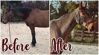 HUGE HORSE MAKEOVER // Washing, Clipping, Pulling mane