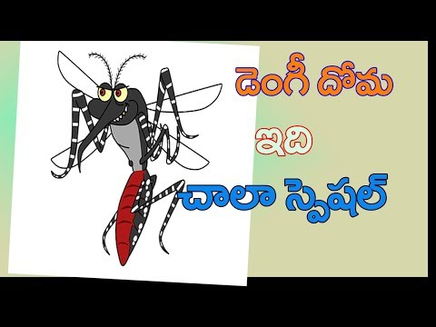 dengue-mosquito-aedes-egypti-specialities