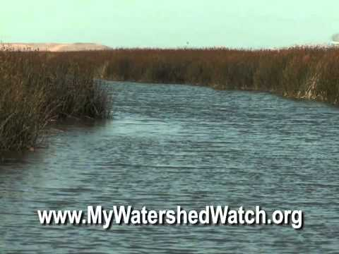 Watershed Watchers Program at the Environmental Education Center at Alviso - Watershed Watch