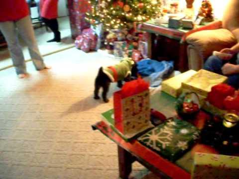 christmas eve dog attack