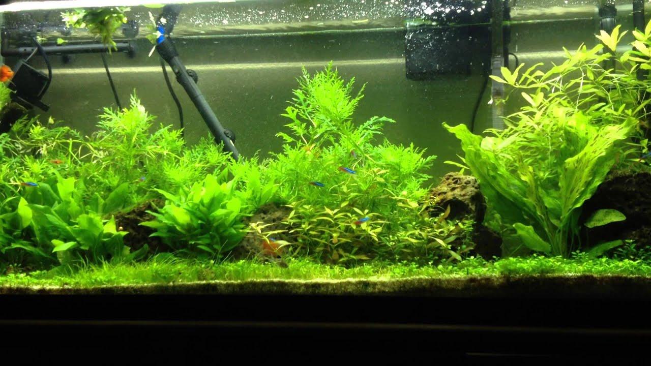 Aquarium fish tank sand - Planted Tank Pool Filter Sand