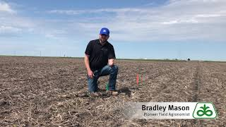 Corn Replant Discussion