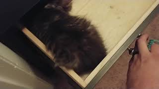 Zara Kitty Loves Sleeping in Small Places