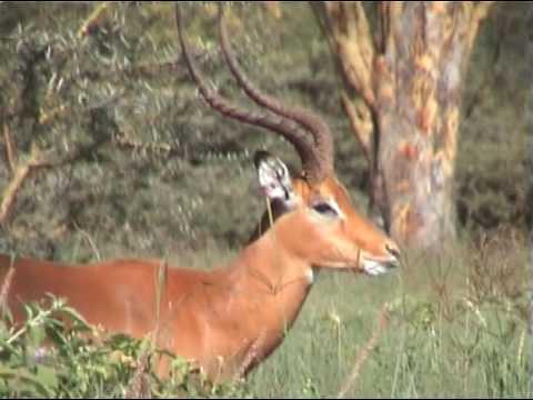 Kenya 2, Lake Nakuru, Masai Mara