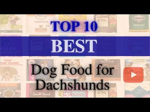 Dog Food✅Top10 Best Dog Food for Dachshunds(UPDATED)