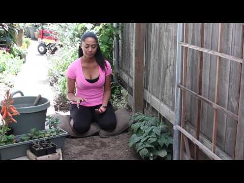 How to Improve Garden Soil Which Has Too Much Nitrogen : The Chef's Garden