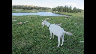 Crescent Lake, Shelf Lakes:  Snowy Range Pack Goat trip (4)