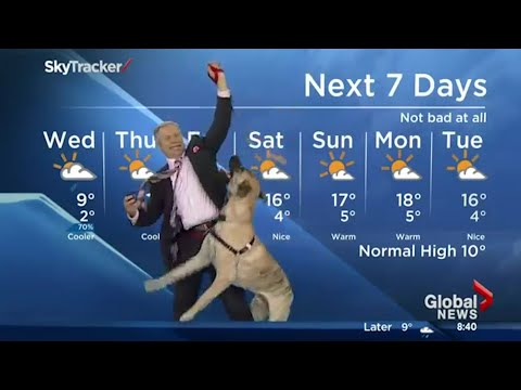 Thumbnail: Ripple the dog doesn't care about the weather forecast