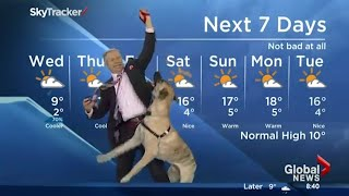 Ripple the dog doesn't care about the weather forecast