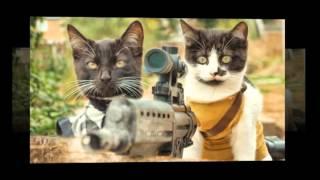 2 #Смешные #Кошки 2016 Кошки #Приколы #Кошка #Прикол