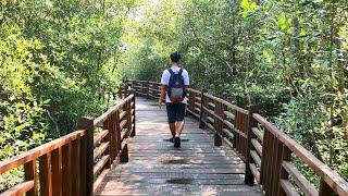 Wisata Mangrove Gunung Anyar Surabaya, adem dan punya banyak spot selfie yg Instagramable