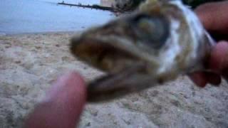 Потасу, рыба исполняет желания.bob marley Одесса-мать  2010.