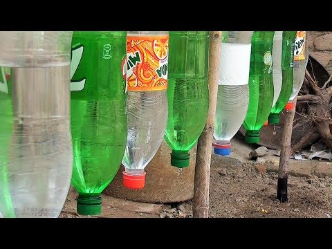plastic-bottle-drip-water-irrigation-system-very-simple