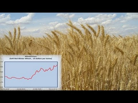 Speculation Drove Wheat Prices Up While Supply Expanded